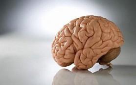 Головной мозг способен к омоложению