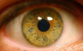 Искусственная сетчатка способна восстановить нормальное зрение