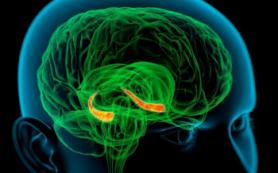 Американские ученые создали карту мозга