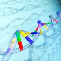 Изменения в иммунной системе влияют на риск развития шизофрении