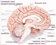 Гены шизофрении и аутизма активны только при развитии мозга