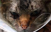 У кошек и людей — сходные формы эпилепсии