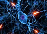 Выявлена способность мозга защищать себя от повреждений