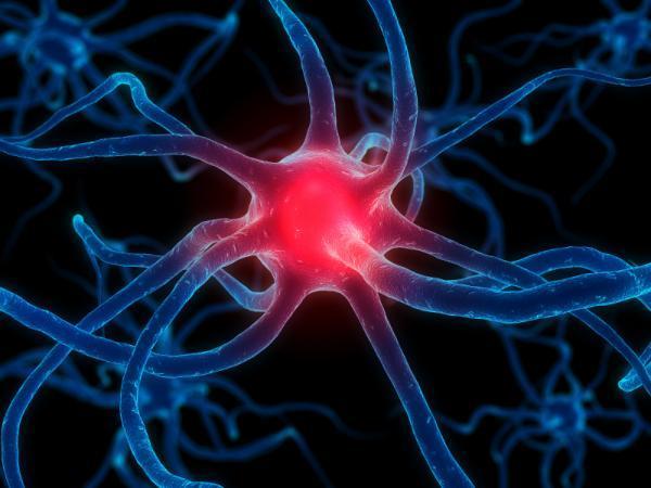 Ученые научились превращать клетки кожи в изоляцию для мозга