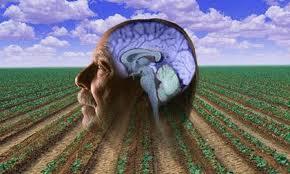 Пестициды увеличивает риск развития болезни Паркинсона