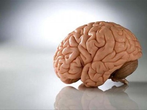 Мозг обрабатывает изображения за 13 миллисекунд