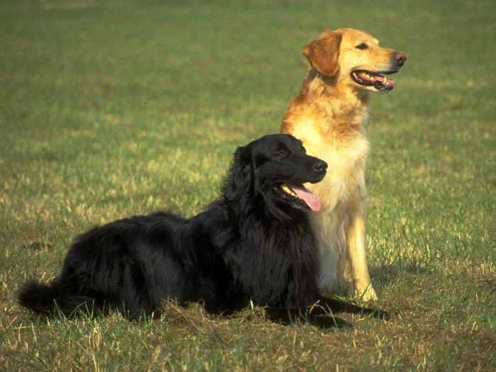Собаки помогут понять причины редкой неврологической патологии