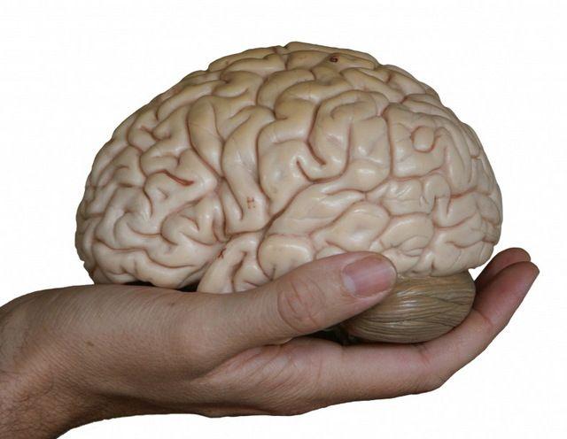Установлена ответственная за социализацию часть мозга