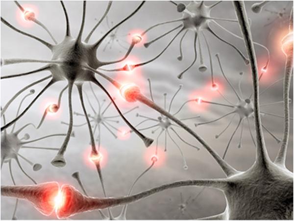 Стимуляция дофаминовых нейронов черной субстанции влияет на обучаемость