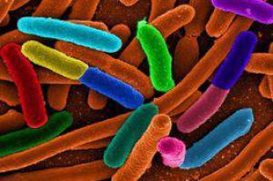 Какие бактерии полезны для мозга