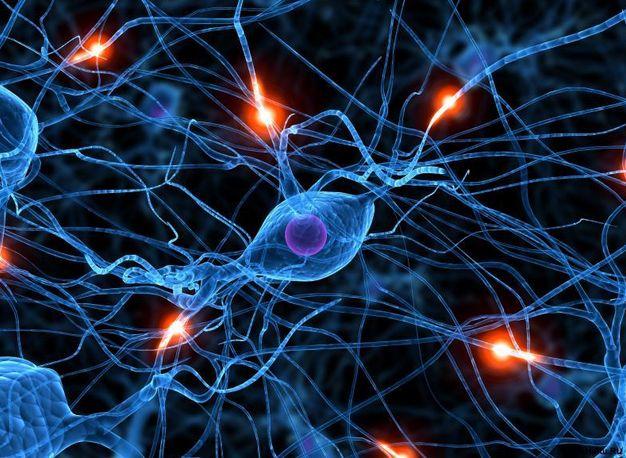 Какие нужны витамины для нервной системы