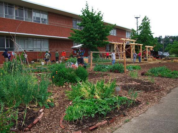 Зеленые школьные дворы понижают стресс
