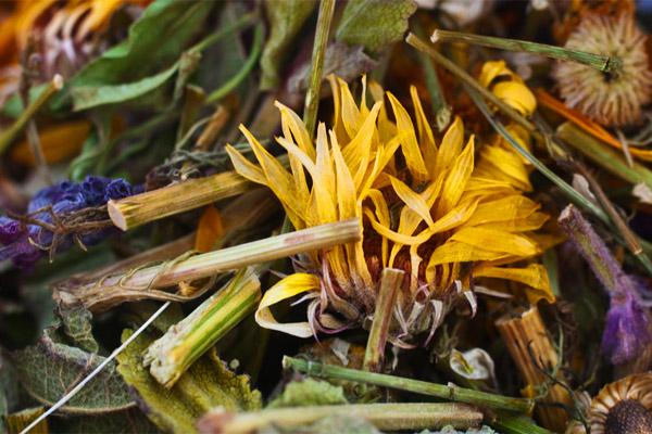 Целительные свойства трав алтая
