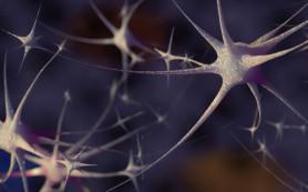 Обнаружен новый механизм восстановления мозга после инсульта