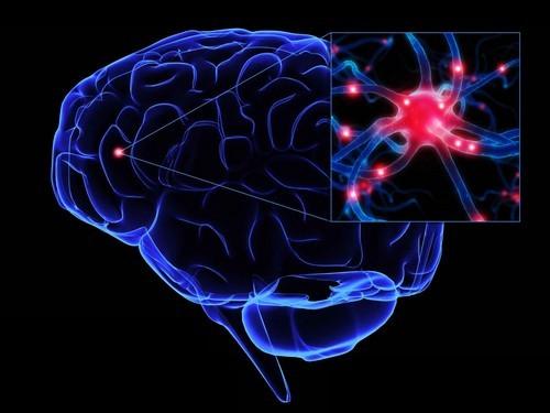 Найдены ускоряющие старение мозга мутации