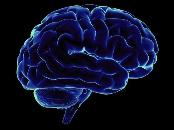 Найдена область мозга, отвечающая за чувство голода
