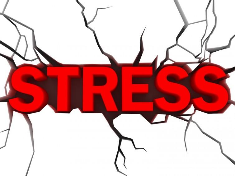 Стало известно, какие полезные продукты помогут забыть о стрессе