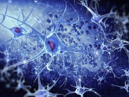 Инновационная 3D-карта мозга позволяет рассмотреть клетки в наномасштабе