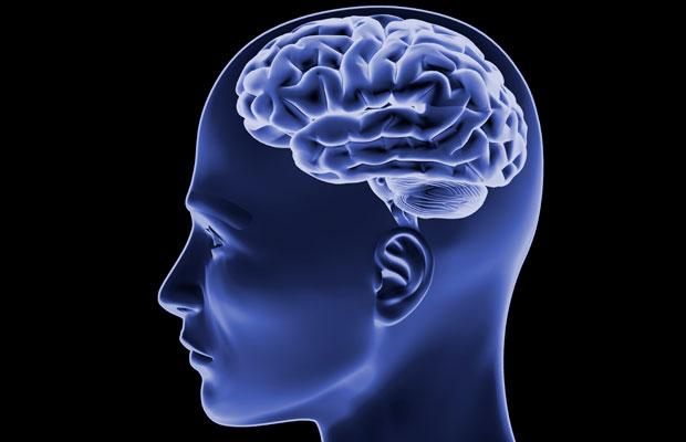 Американские ученые вырастили человеческий мозг