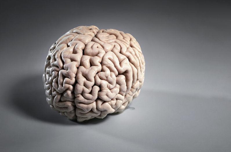 Мозг можно будет омолаживать