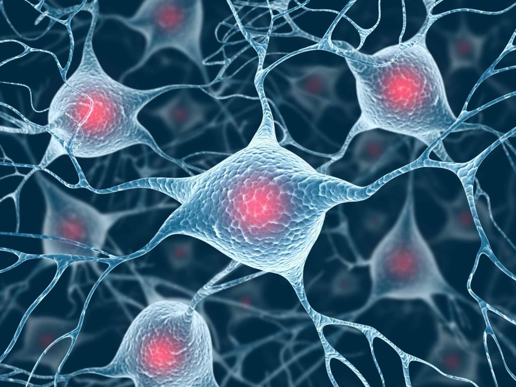 Ученым удалось вырастить важные клетки мозга в лаборатории