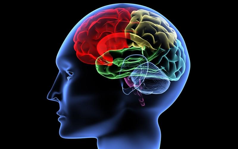 10 продуктов для улучшения работы мозга