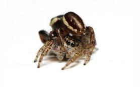 Пестициды разрушают психику пауков