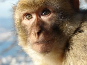 Чем мозг человека отличается от мозга обезьяны – ответ ученых