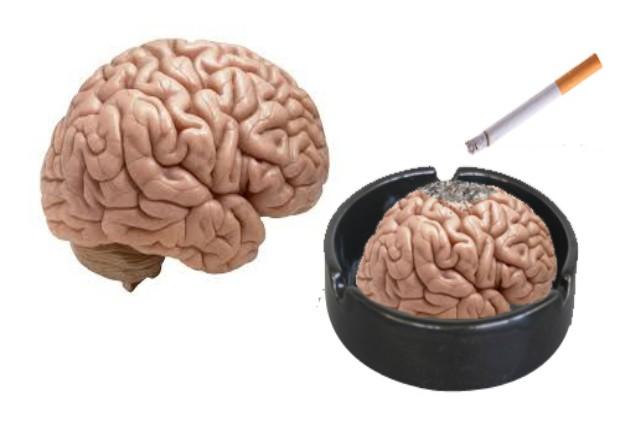 Курение негативно влияет на когнитивные способности человека