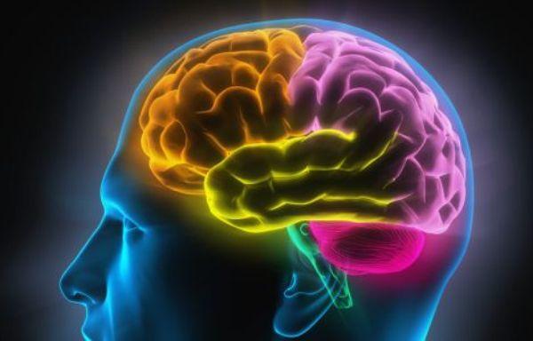 Изучение новой местности улучшает мозговую активность