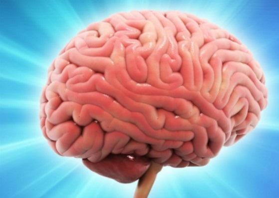 В мозге человека найден механизм, который отключает удовольствие