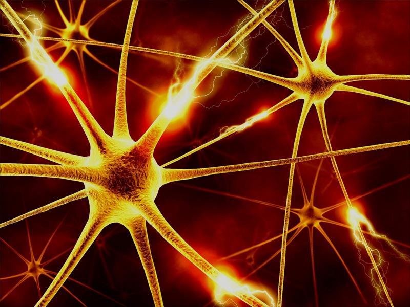 Спинномозговые сети и имплантаты восстановят двигательные функции