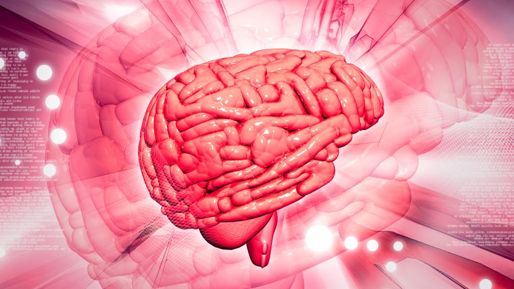 В лаборатории вырастили мини-мозг всего за 8 недель