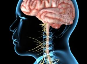 Открытие: чрезмерное употребление сахара вредит головному мозгу