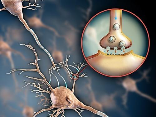 Трансплантация нейронов поможет больным с Альцгеймером и Паркинсоном