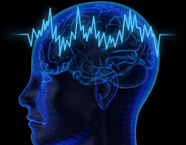 Ученые подтвердили пластичность человеческого мозга