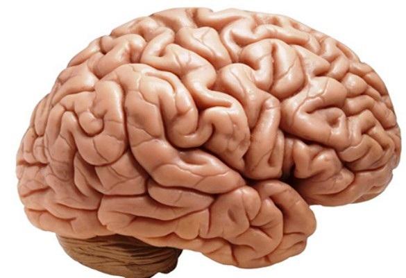 Ученые рассказали, чем отличается в мозг технарей от гуманитариев