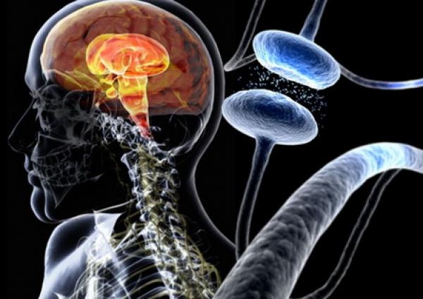 Pfizer и IBM создадут компьютерную систему наблюдения за пациентами с болезнью Паркинсона