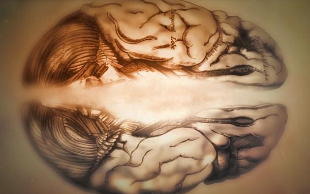 Найдены зоны мозга, формирующие стрессоустойчивость