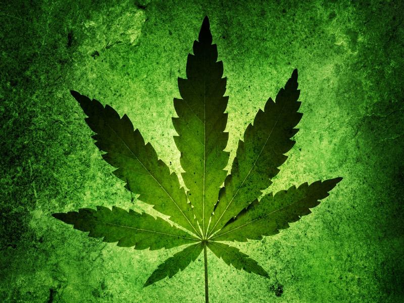 Ученые исследовали связь между марихуаной и психозами