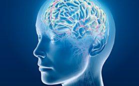 У мужчин и женщин мозг отличается на уровне молекул