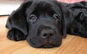 Собаки помогают побороть чувство тревоги и одиночества