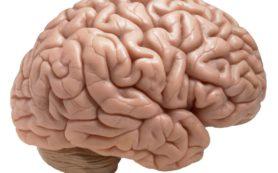 Исследование показало, как мозг стирает воспоминания