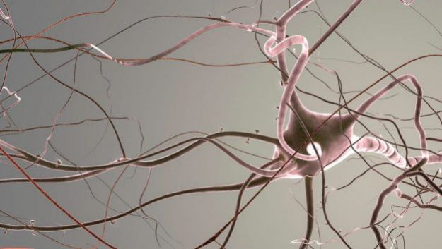 Ученые выяснили, как литий успокаивает нервы