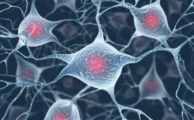 Правильная диета способна защитить мозг от старения