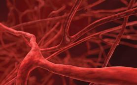 6 травяных средств для профилактики и лечения заболеваний сосудов