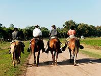 Верховая езда способствует восстановлению после инсульта