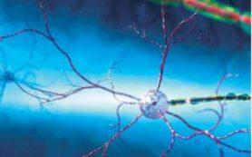 Алкоголь нарушает функции памяти и развитие умственных способностей у подростков