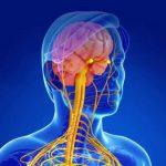 Лекарство от рака замедляет развитие рассеянного склероза