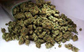 Ученые канадского университета нашли способ снизить вред марихуаны для мозга